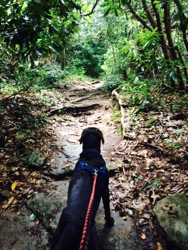 hiking-near-pmc