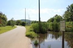 greenway-beaver-pond